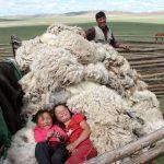 Mongolie – Les derniers nomades