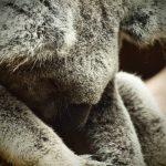 Un tour du monde en fauteuil roulant – Episode #5 : Australie