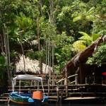 volontariat dans la jungle