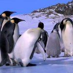 Connaissez-vous l'expression «glisser comme un pingouin» ?