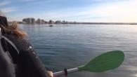 Une soirée incroyable, beaucoup de soleil,un kayak et une sortie pour observer les baleines. Cela se passe au large de Puerto Mardyn en Argentine. Soudain, une baleinearrive dans leur direction, […]