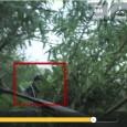 ETRANGE APPARITION Toujours pas d'explication à cette apparition dans les bois de Sibérie. La petite histoire de cette vidéo Philippe Sauve nous explique : J'ai tourné ces images en Sibérie, […]