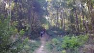 La BOSSAPAS ou la randonnée de l'extrêmeest une randonnée organisée par le Comité Départemental de la Randonnée Pédestre des Hauts-de-Seine (FFRP92) et le Comité Départemental du Tourisme des Hauts-de-Seine. C'est […]