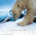 """Livre et documentaire """"To the Arctic"""" en 3D IMAX"""