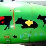 Avec Kulula Airways, on rit toujours. La preuve !
