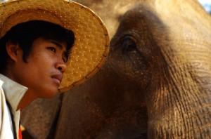 Elephant (Copier)