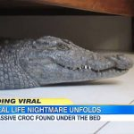 Vidéo : Un homme se réveille avec un crocodile sous son lit