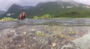 un-documentaire-insolite-sur-les-ours