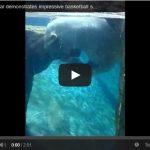 Regardez cette vidéo d'un ours polaire qui joue au basket