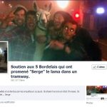 Ivres, 5 bordelais volent un lama et prennent le tramway avec lui