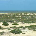 Bons plans pour découvrir le désert tunisien
