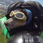 Wingsuit avec un chien