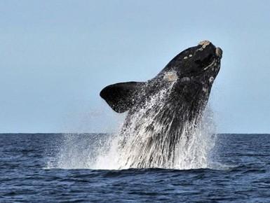 observation des baleines 3