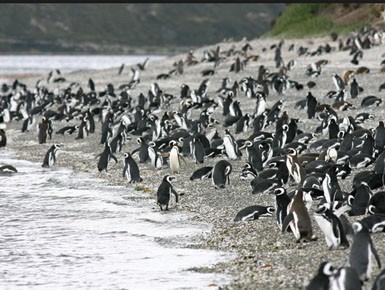 randonnee avec les pingouins 4