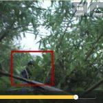Regardez cette apparition étrange dans les bois de Sibérie