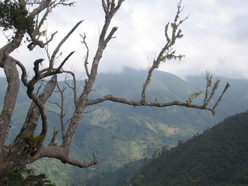 800px-Blue_Mountains,_Jamaica[1]