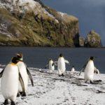 Les terres et mers australes françaises classées au patrimoine mondial de l'Unesco
