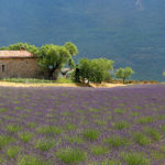 À la découverte de la France : La Provence