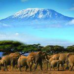 L'aventure ultime : un safari au Kenya